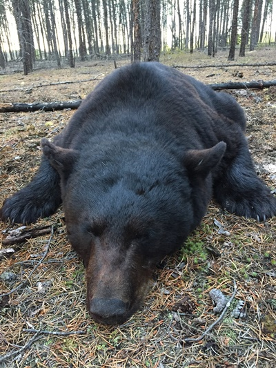 bear-hunting-saskatchewan-crl-2019-01-02