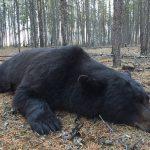bear-hunting-saskatchewan-crl-2019-01-03