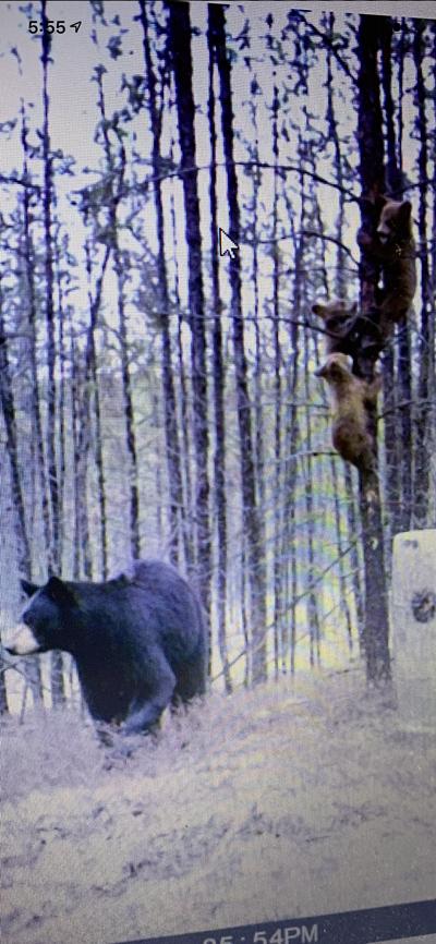 bear-hunting-saskatchewan-crl-2019-01-09