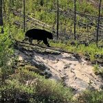 bear-hunting-saskatchewan-crl-2019-01-11