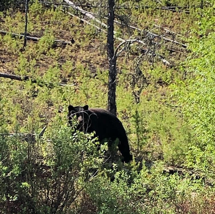 bear-hunting-saskatchewan-crl-2019-01-12