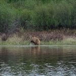bear-hunting-saskatchewan-crl-2019-01-13
