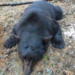 bear-hunting-saskatchewan-crl-2019-01-18