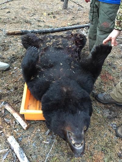 bear-hunting-saskatchewan-crl-2019-01-20