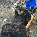 bear-hunting-saskatchewan-crl-2019-01-21