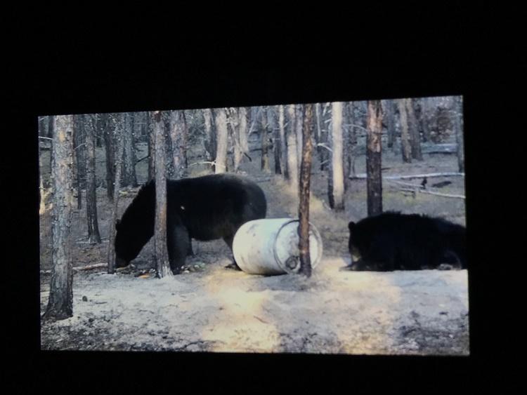 bear-hunting-saskatchewan-crl-2019-01-23