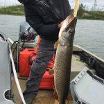 pike-fishing-saskatchewan-crl-2019-198