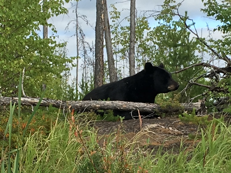 saskatchewan-fishing-fishing-lodge-scenery-crl-2019-06