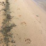saskatchewan-fishing-fishing-lodge-scenery-crl-2019-47