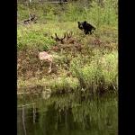 sk-bear-hunting-crl2020-01