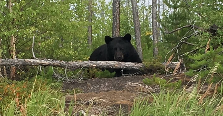 bear-hunting-saskatchewan-crl-2019-01-79